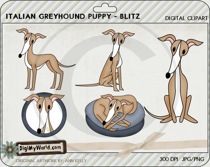 Italian Greyhound (Tan)