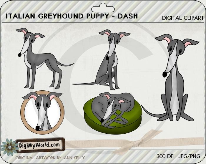 Italian Greyhound (Gray)